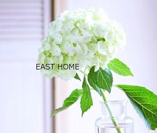 八幡山 イーストホームです。6月3日の誕生花は「アジサイ」