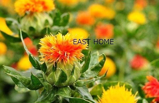 八幡山イーストホームです。6月11日の誕生花は「ベニバナ」