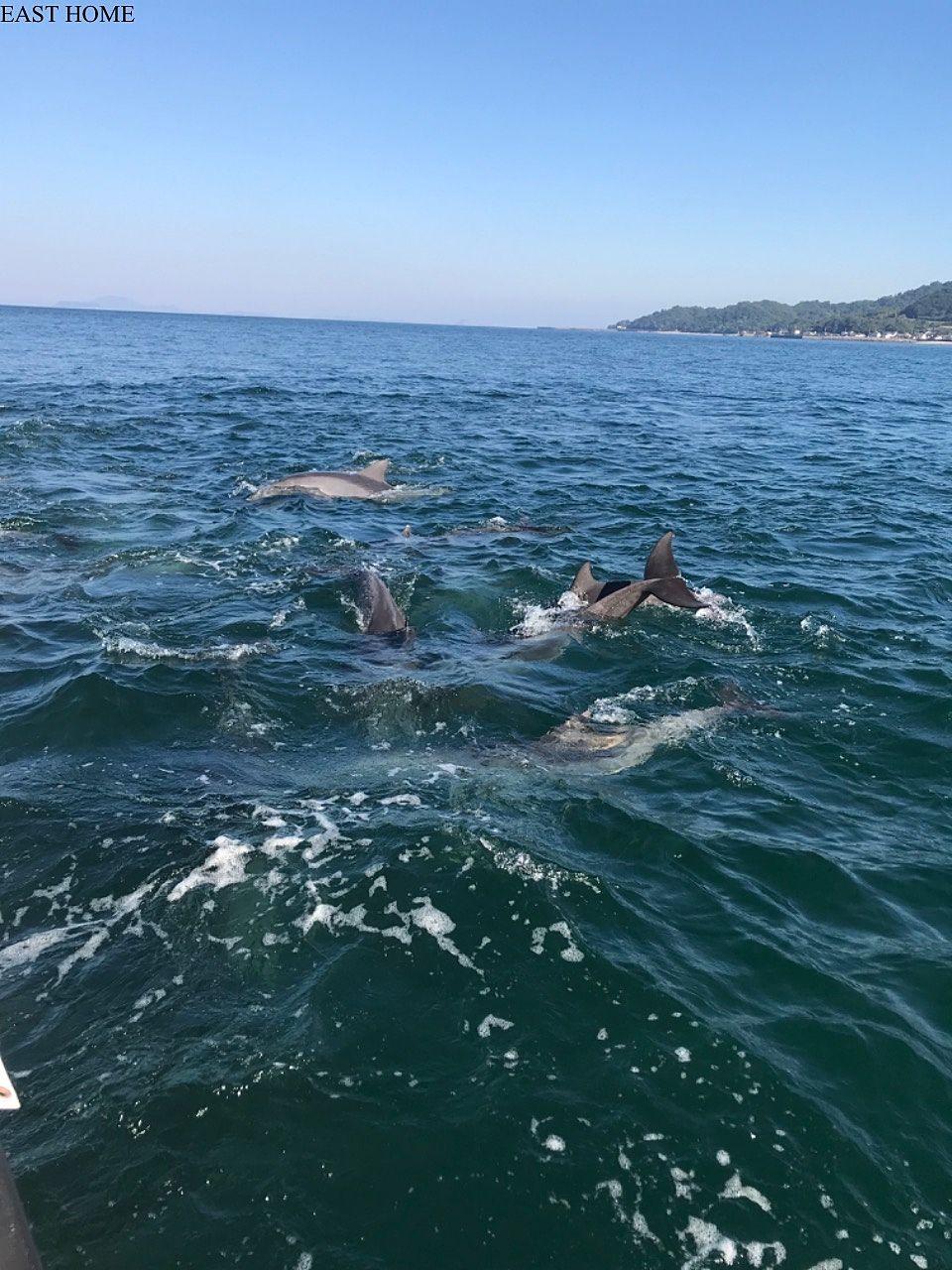熊本にてイルカの大群に遭遇して興奮する!
